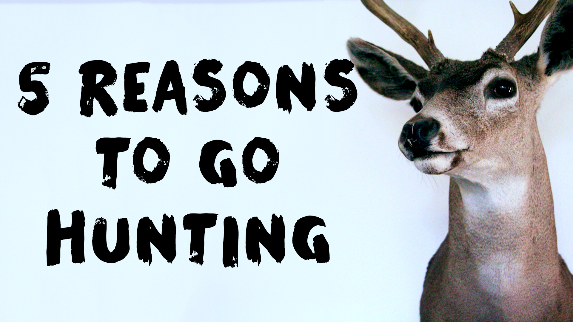 5 Reasons to Go Hunting