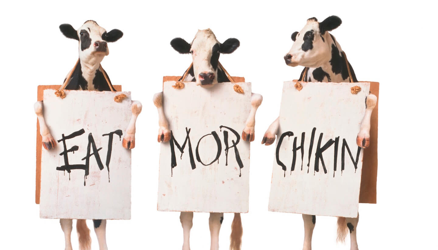 A Message from the Chick-fil-A Cows